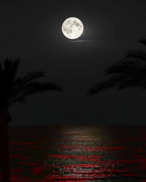 moon over crimson ocean