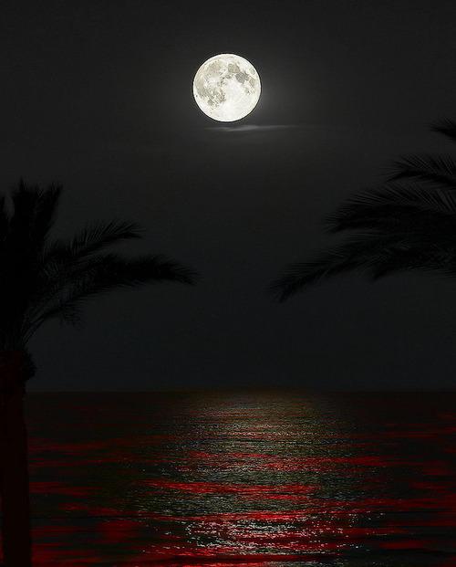 moon over crimson ocean