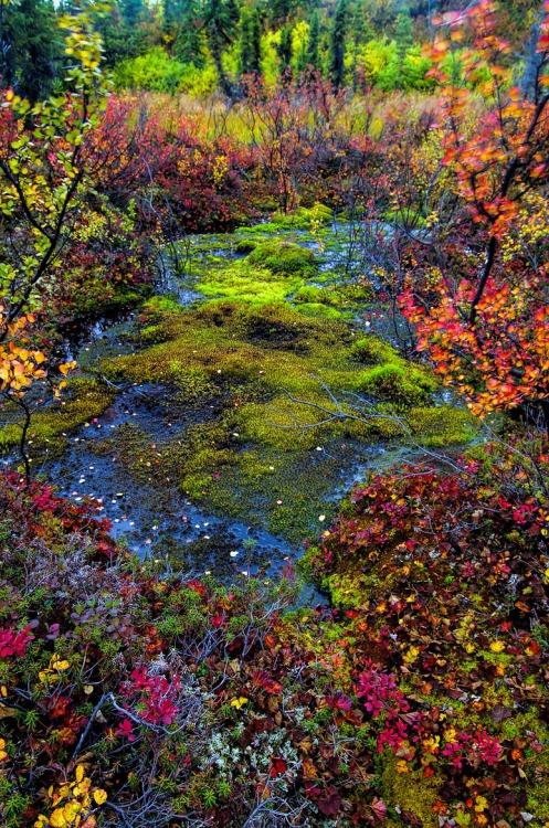 Denali Wetlands