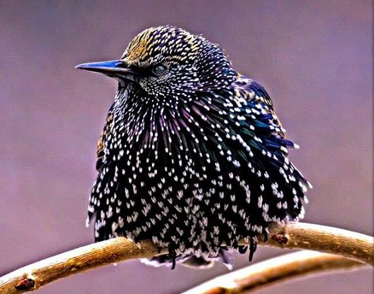 Adorable Beautiful Birds – Special Species