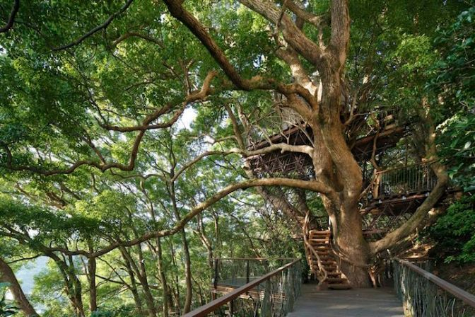 """Kusukusu"" The largest treehouse in Japan build around a 300 years old tree"