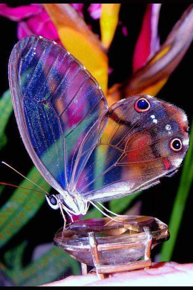 Marvelous creations of nature