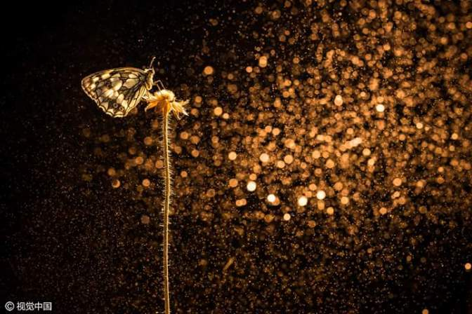 Stunning photography by Etienne Francey with spray water and butterflies