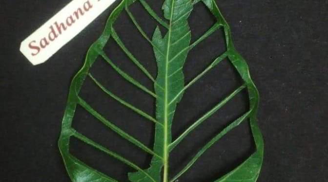 Surya Namaskar Yoga poses beautifully carved on a leaf by Sadhana Kulkarni