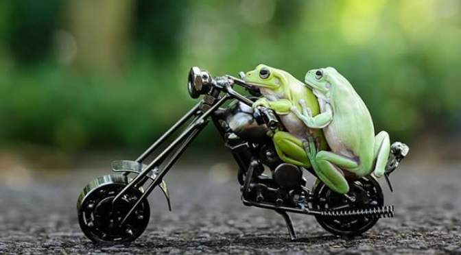 These frogs took a ride on bicycle and a photographer captured the beautiful scene